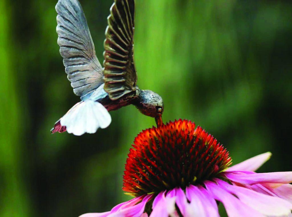 Nicole Ringgold Hummingbird