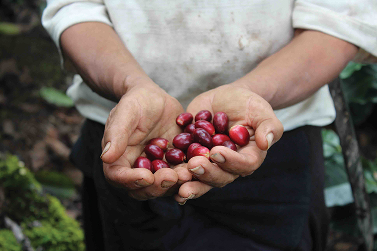 Cultivating Coffee Mother-Daughter Cultural Bond